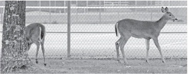 Taylor County hunters strongly urged to submit deer for CWD testing