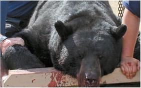 2020 Wisconsin bear season shows increased hunter success