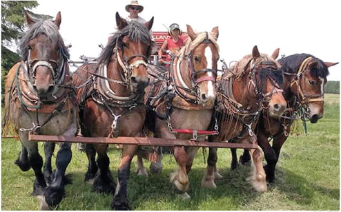 Taylor County farm to host national horse rendezvous