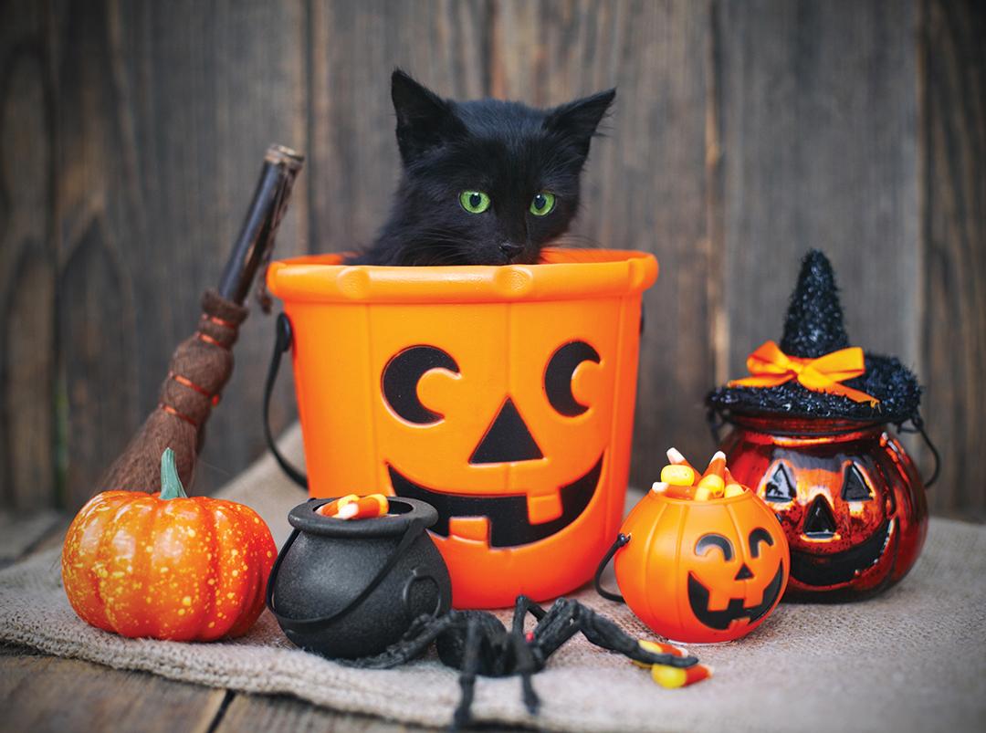 Cornell City Council; Halloween hours set for community's enjoyment